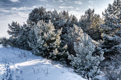 Panoramic snowy winter landscape. Stock Images