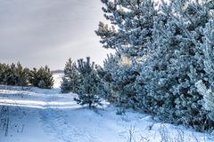 Panoramic snowy winter landscape. Stock Photos