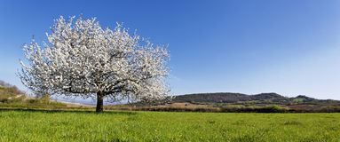 Panoramic spring Stock Image