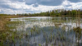 Borki lake on the border between Sosnowiec and Katowice cities. Panoramic spring view of the Borki lake on the border between Sosnowiec and Katowice cities Stock Images