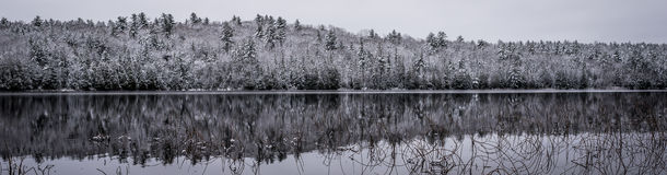 Panoramic stillness in winter forests.  Reflections on still lake water. Stock Images