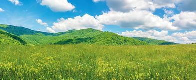 Panoramic summer countryside in mountains. Wonderful sunny day scenery. grassy rural fields and meadows with wild herbs. hills and mountains in the distance royalty free stock photo