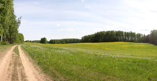 Panoramic Summer Field. In Russia Royalty Free Stock Photos