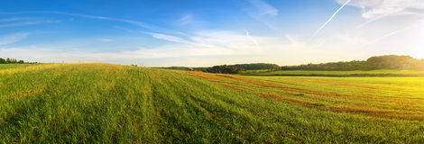 Panoramic summer landscape Stock Photos