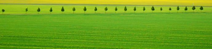 Panoramic summer scene Stock Photography