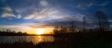 Panoramic Sunset by Lakeside with Swans. A dramatic sunset over a lake where two swans paddle through the golden light. Dark trees grow on the right side of the Stock Photography