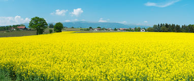 Panoramic Swiss summer rural landscape Royalty Free Stock Images