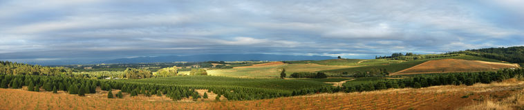 Panoramic Tree Farm Royalty Free Stock Photography