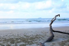 Panoramic tropical beach with a brown branches stock photography