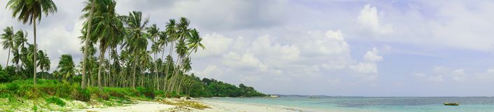 Panoramic tropical beach with coconut palm and white sand stock photo