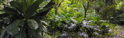 Panoramic of tropical rain forest Royalty Free Stock Photos