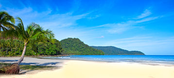 Panoramic tropics Stock Image