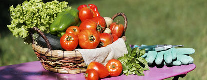 Panoramic vegetables Stock Photo