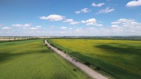 Panoramic view from the air, fields of sunflowers and roads along which cars slowly go. A pacifying aerial view of a car in a field, a blue sky with clouds stock footage
