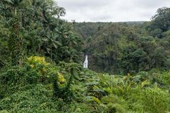 Panoramic view of the Akaka Falls state park on the Big Island of Hawaii royalty free stock photos
