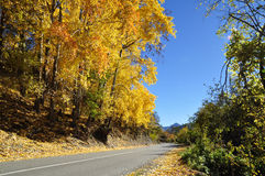 Panoramic view of asphalt road in autumn Stock Photos