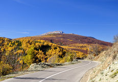 Panoramic view of asphalt road in beautiful golden beech forest during autumn. Stock Photo