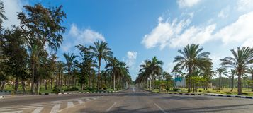 Panoramic view of asphalt road framed by trees and palm trees with partly cloudy sky in a summer day. Montana public park, Alexandria, Egypt Stock Photos