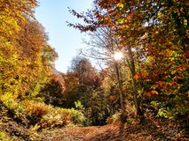 Autumn forest with color trees. Panoramic view of autumn forest with color trees and path. Seasonal red, yellow, green color leaves royalty free stock photos