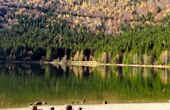Panoramic view of autumn forest lake Royalty Free Stock Image