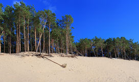 Panoramic view of the Baltic dunes, Balta kapa - Jurmala - Latvi Stock Photos