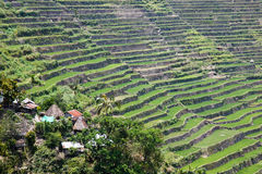 Panoramic view of the Batad rice field terraces in Ifugao province, Banaue, Philippines Royalty Free Stock Image