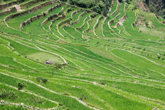 Panoramic view of the Batad rice field terraces, Ifugao province, Banaue, Philippines Stock Image