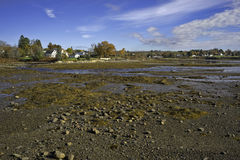 Searsport Maine Low Tide Rocks Seaweed Royalty Free Stock Photo