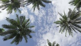 Panoramic view from below of palm trees against the background of the sky.  stock video footage