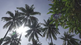 Panoramic view from below of tops of palm trees against the background of the solnetsny blue sky in the tropical resort.  stock video footage
