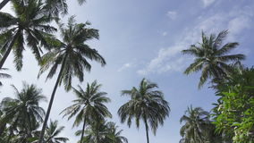 Panoramic view from below of tops of palm trees against the background of the solnetsny blue sky in the tropical resort stock video footage