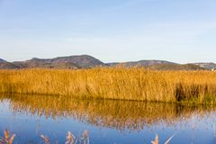Panoramic view of a bird observatory, in the wetlands natural park La Marjal in Pego and Oliva royalty free stock photos