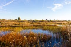 Panoramic view of a bird observatory, in the wetlands natural park La Marjal in Pego and Oliva. Spain stock image