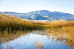 Panoramic view of a bird observatory, in the wetlands natural park La Marjal in Pego and Oliva. Spain royalty free stock image