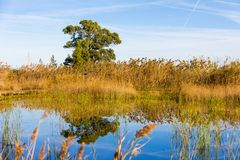 Panoramic view of a bird observatory, in the wetlands natural park La Marjal in Pego and Oliva. Spain stock photos