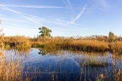 Panoramic view of a bird observatory, in the wetlands natural park La Marjal in Pego and Oliva stock photo