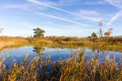 Panoramic view of a bird observatory, in the wetlands natural park La Marjal in Pego and Oliva. Spain stock images
