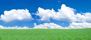 Panoramic view of blissful grassland. Blue sky above Royalty Free Stock Photo
