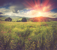 Panoramic view of the blooming flowers, summer meadow in the mountains and blue cloudy sky. Alpine seasons, natural background. Filtered image:cross processed royalty free stock photography