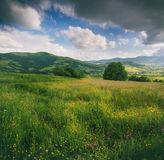 Panoramic view of the blooming flowers, summer meadow in the mountains and blue cloudy sky. Stock Images