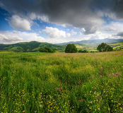 Panoramic view of the blooming flowers, summer meadow in the mountains and blue cloudy sky. royalty free stock photos