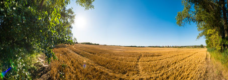 Panoramic view of brown autumn field Stock Image