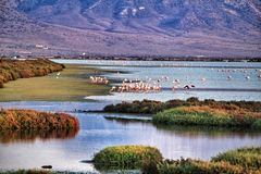 Panoramic view of Cabo de Gata wetlands with pink flamingos in the background. Panoramic view of Cabo de Gata wetlands with pink flamingos and mountains in the royalty free stock photo