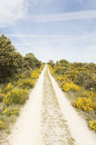 Panoramic view with Camino de Santiago mountain road in Castilla y Leon Royalty Free Stock Photos