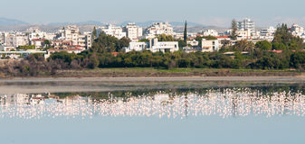 Panoramic view of the city of Larnaca, CYPRUS Stock Images