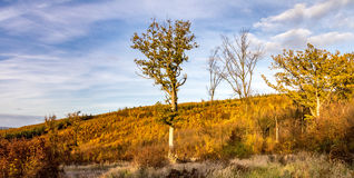 Panoramic view of colorful autumnal forest Stock Image