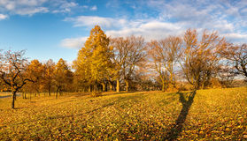 Panoramic view of colorful autumnal landscape with trees Royalty Free Stock Photos