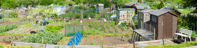 Panoramic view of Communal allotments in Suffolk, England Stock Images