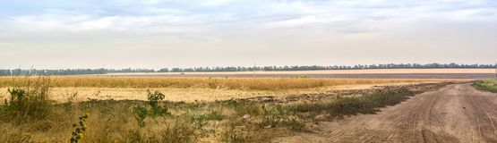 Panoramic view. Country landscape with a dusty road and wheat field at summe day. Panoramic view. Country landscape with a dusty road and yellow wheat field at Royalty Free Stock Photography