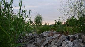 Panoramic view on a country pond with rushes. Village pond during twilight. Pond at dusk stock video footage